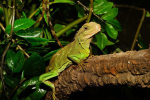reptile brain, behaviour, social situations - Fight,flight and other responses